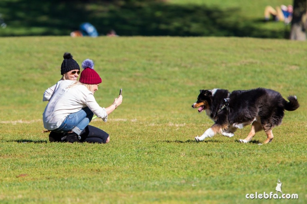 hilary-duff-playing-with-dogs-at-a-park-in-new-york (6)